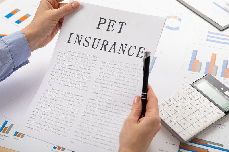 застраховать собаку, застраховать кошку
