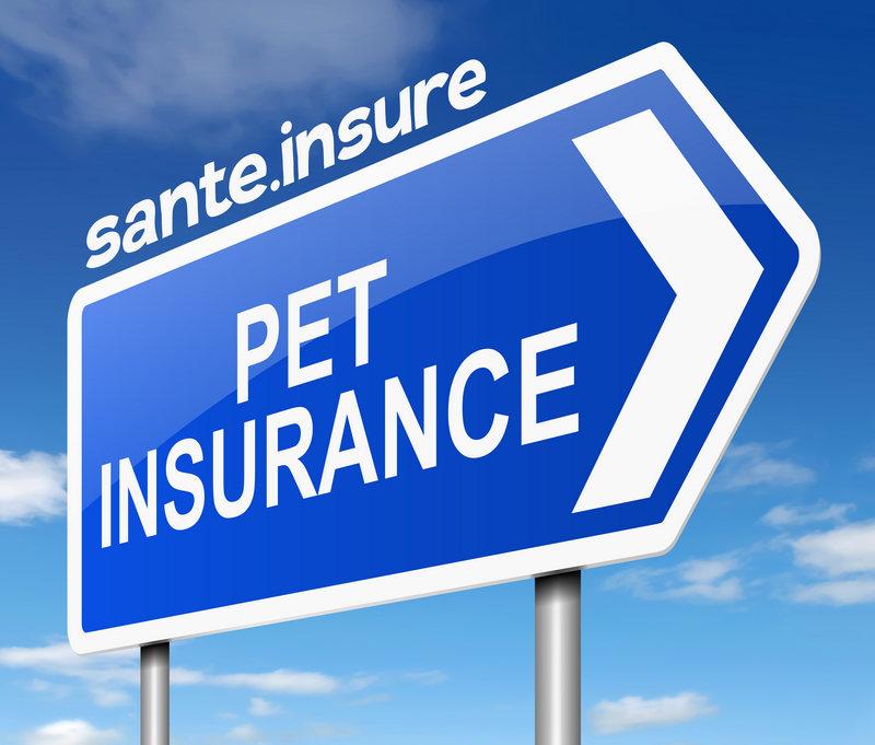 страхование животных, страховой полис