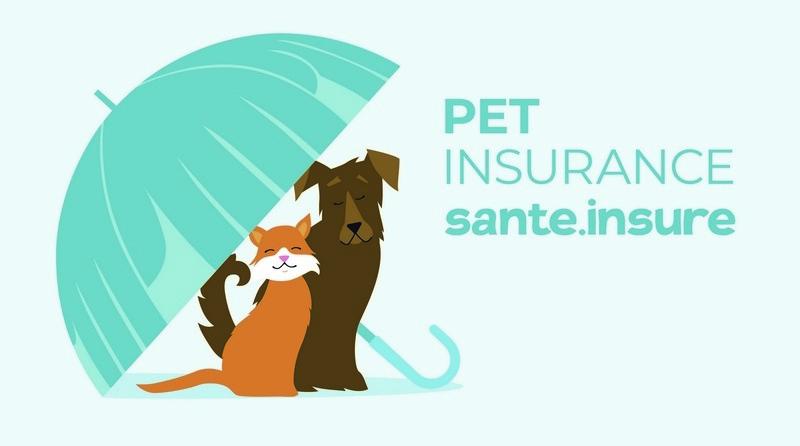 Страховка животных